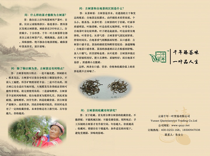 画家王兴杰与千年一叶原生态古树茶易县分销处 - 艺无止境 - 艺无止境的博客